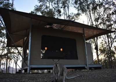 Glamping eco-tent with wallaby