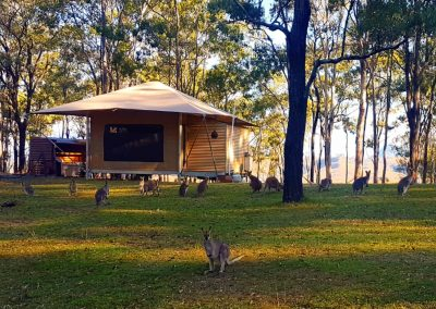 Glamping and wallaby feeding